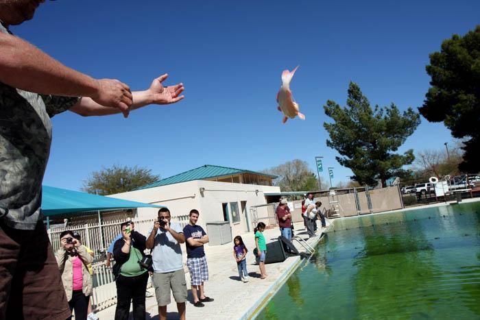 Jumpin' catfish