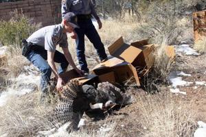 Turkeys moved into Santa Ritas