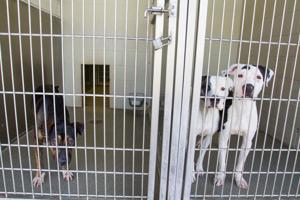 Pima Animal Care Center