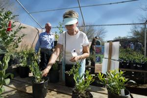 Garden lovers prepared, Tohono Chul gearing up for Fall Plant Sale