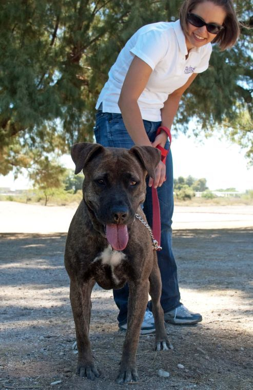 Pima Animal Care - dog