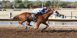 Horse racing at Rillito Park