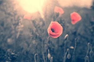 American Legion Auxiliary poppy symbolizes nation's sacrifice