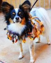 Pet News - HSSA jumps into the fall season