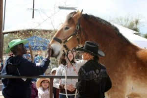 Fund-raiser aids horse sanctuary