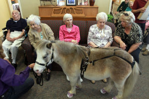 Little Hooves And Big Hearts Visits Clare Bridge: Residents at Clare Bridge of Oro Valley had the opportunity last week to get close to a couple of miniature horses last week.  - Randy Metcalf/The Explorer