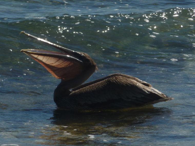 Laughing Bird Caye, Belize.
