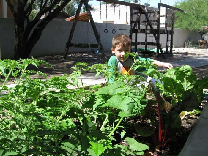 DESERT LOCAVORE: Creating edible schoolyards