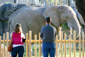 Record visitors to Reid Park Zoo