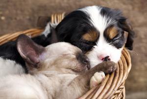 Cuddled-up cuties