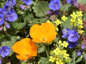 Wildflower tours at Tohono Chul