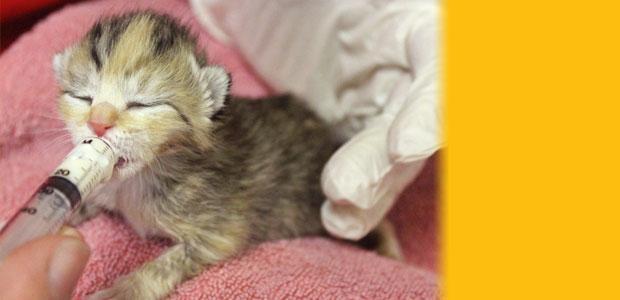 Foster Kitten humane society