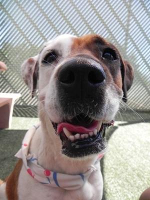 dog at Pima animal care center