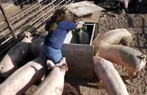 Livestock Lessons