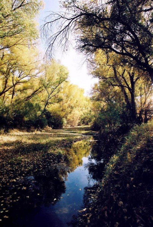 A Southern Arizona river walk