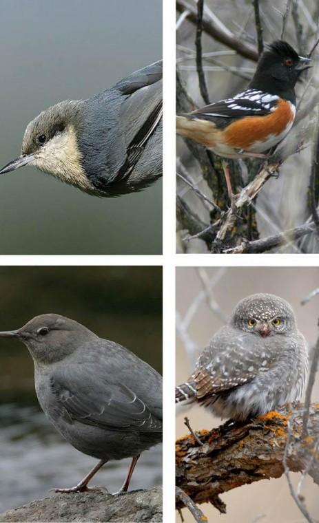 Audubon seeks bigger role