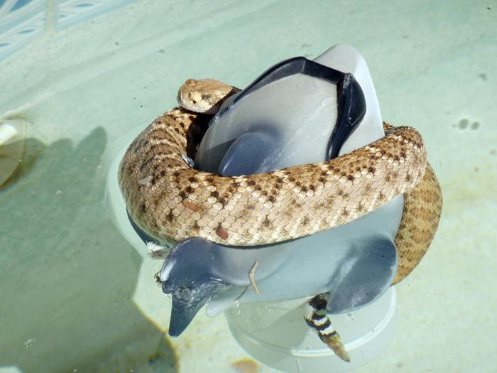 Snake vs Shark