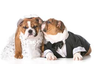 Dog bride and groom puppies