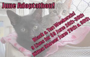 June Adoptathon - Hermitage Shelter