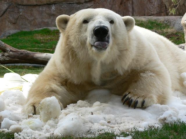 Snow at Reid Park Zoo