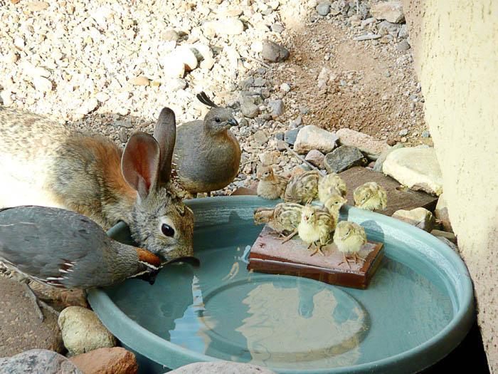 A Rabbit and Quails