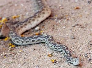 Snakes put heat on firefighters