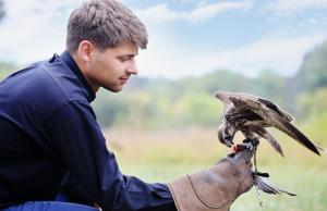 man falcon feeds