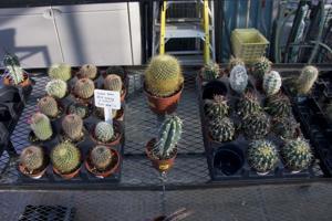 Rillito Nursery