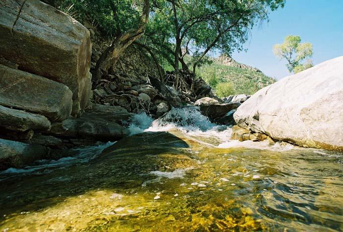 Rick Metcalf: Sabino Canyon, a nearby world away