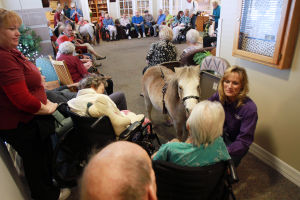 Little Hooves And Big Hearts Visits Clare Bridge: Little Hooves and Big Heart's co-founder Tammy Mockbee takes her miniature horse, Lilly, around to some of the residents at Clare Bridge of Oro Valley last week.  - Randy Metcalf/The Explorer