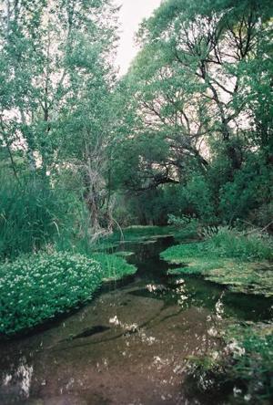 Cienega Creek offers brief respite from summer heat