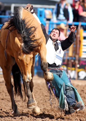 Fiesta De Los Vaqueros: Jerod Johnson of Weatherford, Texas, gets hung up on Public Enemy during the bareback riding portion of Friday's Tucson Rodeo.  - Randy Metcalf/The Explorer