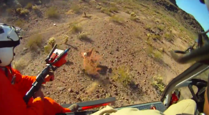 Video Show Bighorn Sheep Captures: The Arizona Game and Fish Department released a video on their YouTube channel showing the capture of the bighorn sheep with aerial net guns last November in mountains near Yuma.