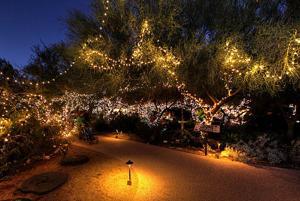 Holiday lights at Tohono Chul Park 2