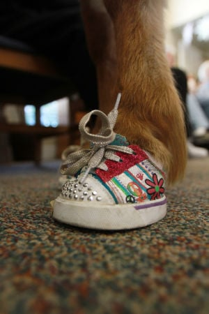 Little Hooves And Big Hearts Visits Clare Bridge: The miniature horses wore styled with shoes, which were found at a local teddy bear-making store.  - Randy Metcalf/The Explorer