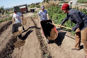 Applicants needed for spring's apprenticeships at Marana farm