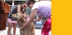 Tails and Ales Humane Society of Southern Arizona