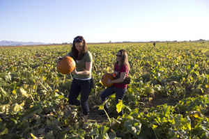 Marana Pumpkin Patch: Erin Gilmore and Frannie Valdez pick out a pumpkin at the Marana Pumpkin Patch. - Hannah McLeod/The Explorer