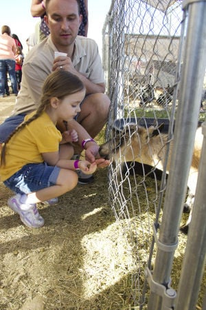 Marana Pumpkin Patch: Trista Zeiger, 4, feeds the goat with some help from her dad, Aaron Zeiger. - Hannah McLeod/The Explorer