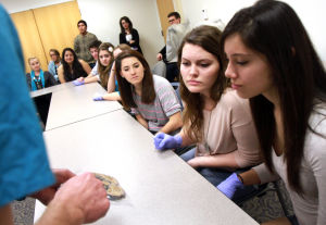 Canyon Del Oro Forensics Class: Alejandra Sosa, right, Marisa Lind, middle, and Cheyenne Sanchez, left, are shown a cross-section of a human heart.  - Randy Metcalf/The Explorer