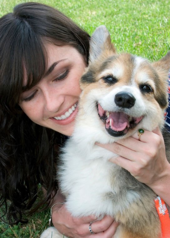 Healthy Pet Teeth - Dog
