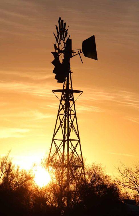 Hawk perched on a windmill