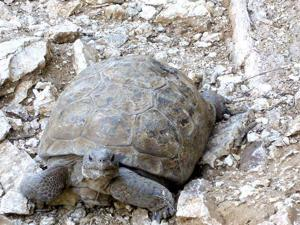 Finding homes for tortoises