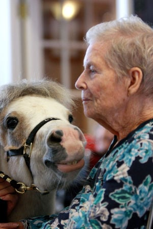 Little Hooves And Big Hearts Visits Clare Bridge: Lilly, a miniature horse, gets a little cozy with Clare Bridge of Oro Valley resident Lois Glomb. The group Little Hooves and Big Hearts visited the Alzheimer's and dementia care facility last week.  - Randy Metcalf/The Explorer