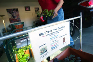 Local Gardening: John Keller believes that EarthBoxes are one of the best forms of local gardening and is one of the easiest and yields vegetables year-round. - Randy Metcalf/The Explorer