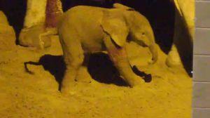 Elephant calf born at Reid Park Zoo