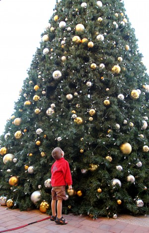 Oro Valley Holiday Tree Lighting: Logan Bishop, 6, takes in the view of the Oro Valley Christmas Tree Friday before the tree was ceremoniously lit.  - Randy Metcalf/The Explorer