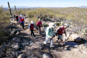 10,000-Mile Hikers: The Sun City Oro Valley's hiking club members, from right to left, Clay Pruitt, Bob Esparza, Lynn Pruitt, and Leslie Esparza, hike along the 50-year Trail in Catalina State Park.  - Randy Metcalf/The Explorer