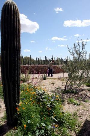 On Sonoran Desert, there are 5 seasons