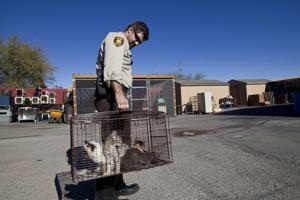 Marana updates animal care regulations